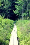 Path to the dark wood